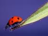 Uge_18_ladybird