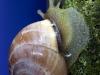 Uge_29_Snail