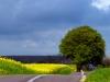 vantinge-vejen005